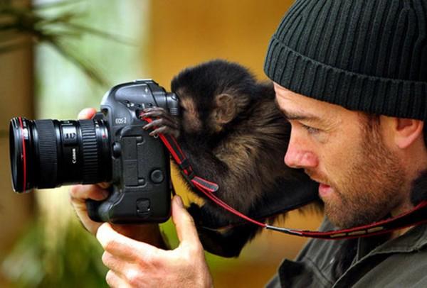 monkey_camerman-600x406